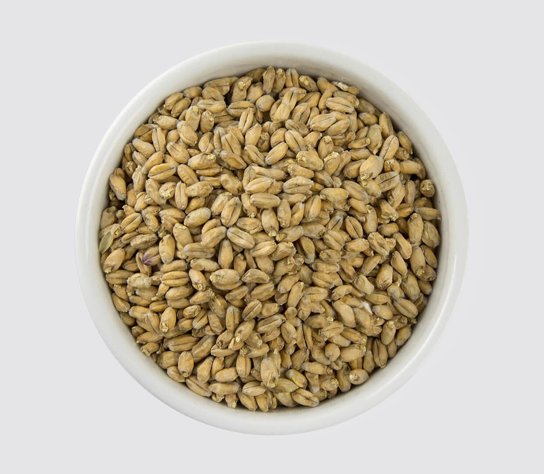Whole Wheat Malt